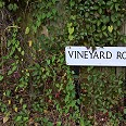 vineyard-row-opp-cut-out-hedge
